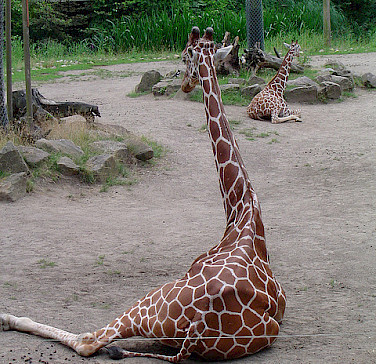 Zoo in Duisburg. Photo via Flickr:Axel Schwenke