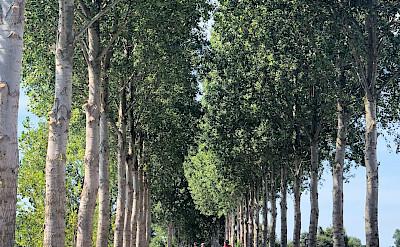 Biking the flat bike paths in Holland. ©TO-Nicki Taylor