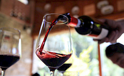 Wine tasting perhaps on the Venice to Porec Bike Tour. ©Photo via TO