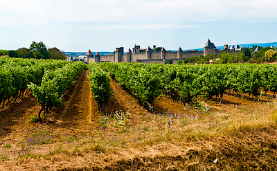 Vineyards in Carassonne, France. Flickr:bawpcwpn