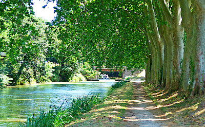 Biking along the tow path and the Canal du Midi in France. Flickr:Andrew Gustar