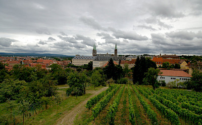 Vineyards and Marienberg Fortress in Wurzburg, region Franconia in Bavaria, Germany. Flickr:jinpal song