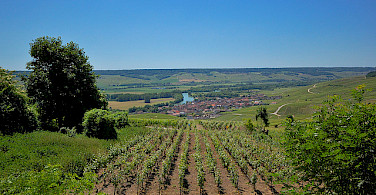 Vineyards surrounding Epernay. Photo via Flickr:Random_fotos