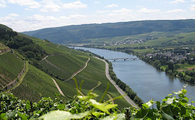 Vine-covered hills along the Mosel River Valley. Flickr:Areks