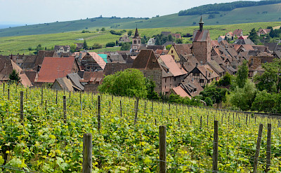 Vineyards in Riquewihr, Alsace, France. Flickr:Pug Girl