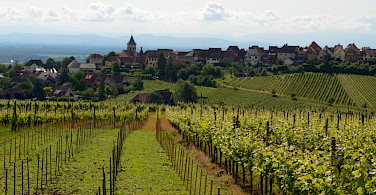 Vineyards abound in north-eastern France. Near Riquewihr. Photo via Flickr:Pug Girl