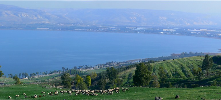Sheep grazing alongside the Sea of Galilee. Photo via Flickr:Zachievenor
