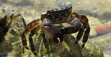 Crabs in Novigrad. Photo via Flickr:Alberto Gremese