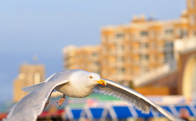 Albatross in Scheveningen, South Holland, the Netherlands. Flickr:Random_fotos
