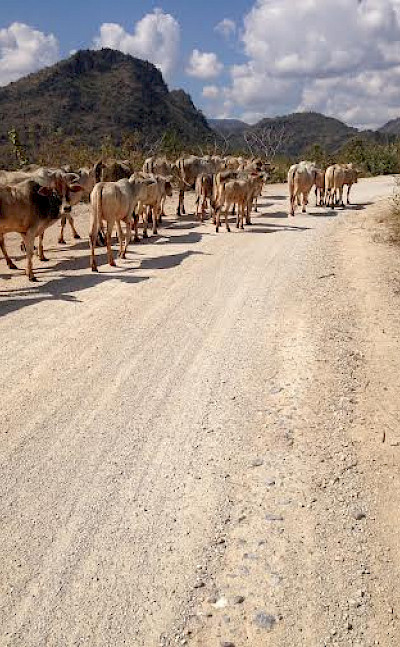 Local traffic in Myanmar. Photo by Hennie.