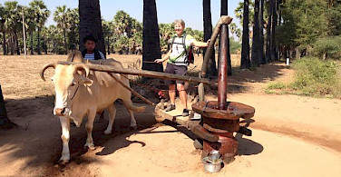 Hennie is showing us how peanut oil is made here en route from Popa Mountain to Bagan, Myanmar.