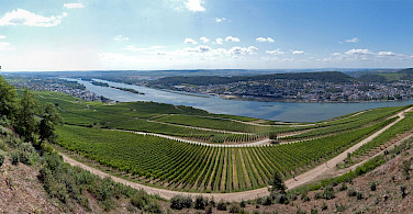 Vineyards along the Rhine in Rudesheim, Germany. Photo via Flickr:Philipp Gerbig