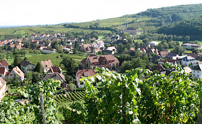 Vine-covered hills in Andlau, Alsace, France. Flickr:Francois Schnell