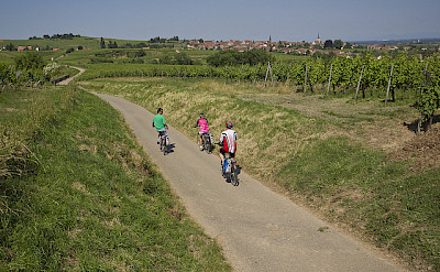 Along quiet roads on this bike tour of Alsace, France. Flickr:©Espace Randonnee