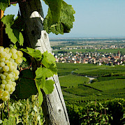 Pearls of the Alsace Wine Route Photo