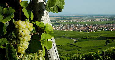 Overlooking Turckheim, Alsace, France. Photo via Flickr:Nigab Pressbilder