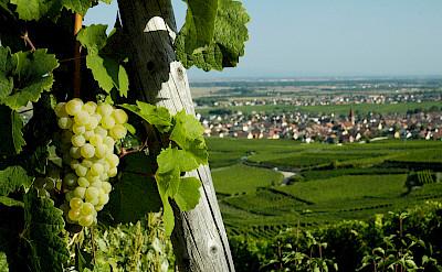 Overlooking Turckheim, Alsace, France. Flickr:Nigab Pressbilder