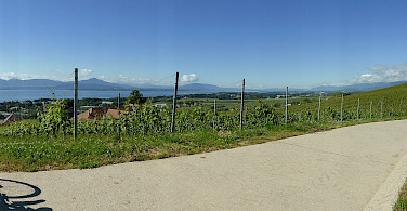 Vineyards and bike paths along Lake Geneva, Switzerland. Photo via Flickr:Henk Bekker