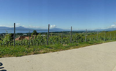 Vineyards and bike paths along Lake Geneva, Switzerland. Flickr:Henk Bekker