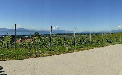 Biking Lake Geneva with her vineyards in Switzerland. Flickr:Henk Bekker