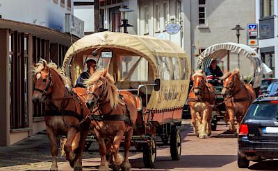 Horses in Weserbergland, Germany. Flickr:trombone65