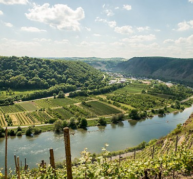 Vineyards along the Rhine River in Koblenz, Germany. Photo via Flickr:Sang yun Lee