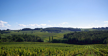 Vineyards in Bergerac, Dordogne Perigord, France. Photo via Flickr:pays bergerac