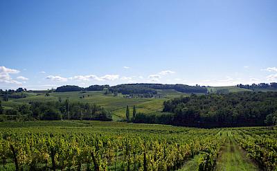 Vineyards in Bergerac, Dordogne Perigord, France. Photo via Flickr:pays bergerac