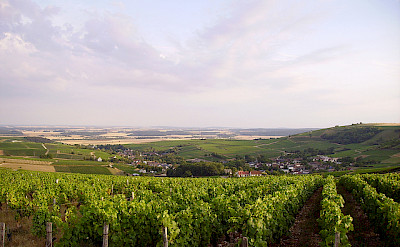 Many rolling vineyards within the Cheverny and Loire Valley regions. Photo via Flickr:Jean-Pierre