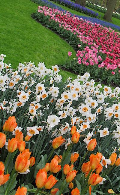 Keukenhof tulips! Flickr:Imbiblio