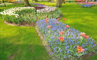 Keukenhof tulips! Flickr:gnuckx