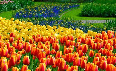 Keukenhof tulips! Flickr:Adriano Aurelio Araujo