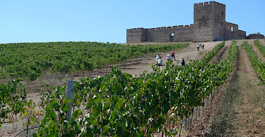Vineyards leading to Valongo Castle, Alentejo, Portugal. Photo courtesy of TO