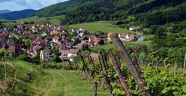 Vineyards leading to Riquewihr, France. Photo via Flickr:Pug Girl