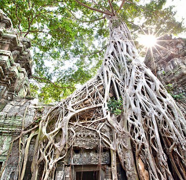 Ta Prohm - the temple at Angkor, Siem Reap Province, Cambodia. Photo via Flickr:Lisa Bettany