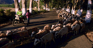 Goats in the way! Photo via Flickr:Bryan Ledgard