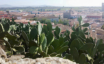 Cactus in Trujillo, Extremadura, Spain. Photo via Flickr:Tola A.
