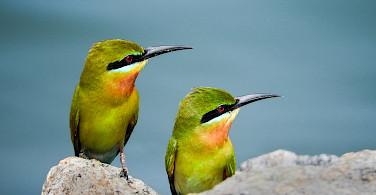 Exotic birds at Udawalawa National Park in Sri Lanka. Flickr:Dananjaya Chathuranga Photography