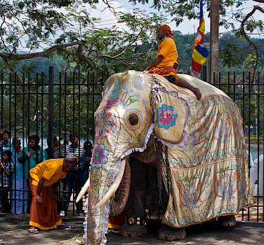 Elephants at the Temple of the Tooth, Kandy, Sri Lanka. Flickr:rufus.kahler