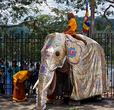 Elephants at the Temple of the Tooth, Kandy, Sri Lanka. Photo via Flickr:rufus.kahler