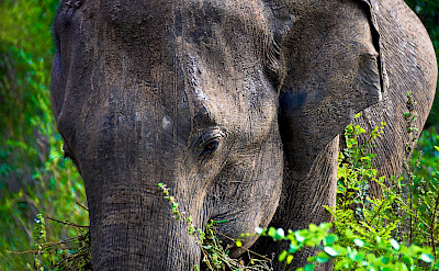 Elephants at Udawalawa National Park in Sri Lanka. Flickr:Peter Addor