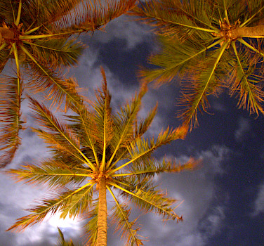 Coconut trees in Colombo, Sri Lanka. Photo via Flickr:YoTuT