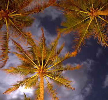 Coconut trees in Colombo, Sri Lanka. Photo via Flickr:YoTuT