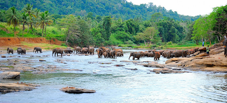 Elephants bathing in Sri Lanka. Flickr:Guido Bramante