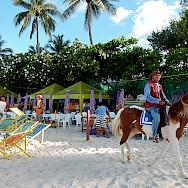 Horse on beach in Hua Hin, Thailand. Photo via Flickr:Michael Coghlan
