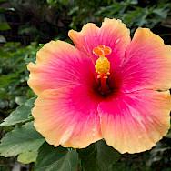 Floral wonders in Kuraburi, Thailand. Photo via Flickr:Kent Wang