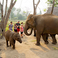 Friendly elephants in Thailand. Photo via Flickr:Evo Flash