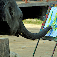 Painting elephants in Thailand. Photo via Flickr:Dennis Jarvis