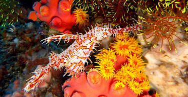 Corals galore in Moalboal, Pescador Island, the Philippines. Flickr:Lakshmi Sawitri