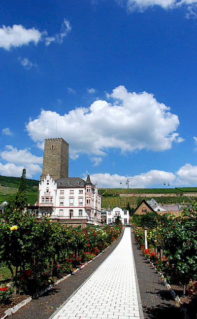 Vineyards on your way to Rudesheim, Germany. Photo via Flickr:chico